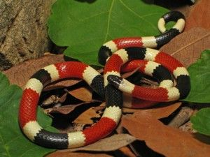 Snakes, Coral and Amazon rainforest on Pinterest