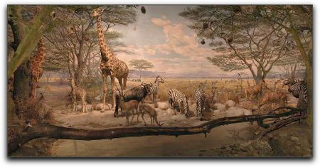 watering hole, african savanna, academy of sciences museum, san francisco