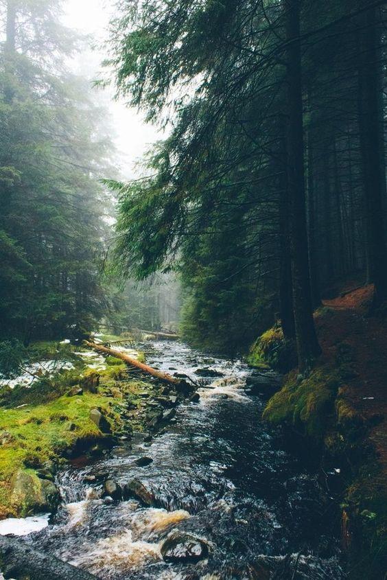 Обитель Лесной Ведьмы's photos – 31 albums | VK