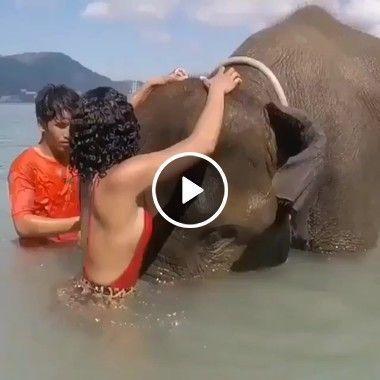 Esses jovens está tentando banhar o elefante.