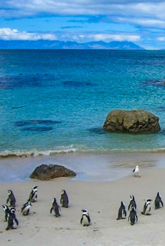Boulders Beach - just south of Cape Town, South Africa and home to a colony of African penguins