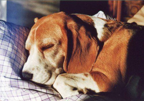 Puppy dreams.