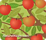 10 Ways to use Apple Cider Vinegar