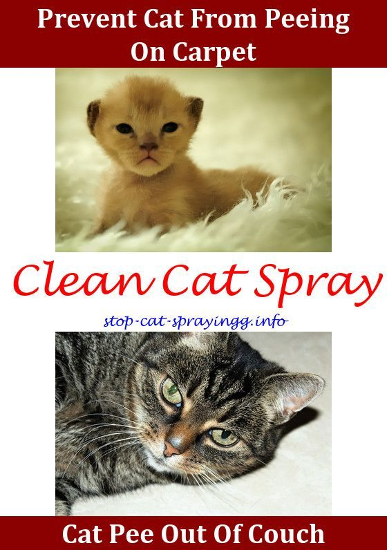 Cat Peeing On Carpet Cat Pee Smell Removal Watches Cat Peeing Baking Soda Elderly Cat Pooping On Floor Best Product To Re Cat Spray Cat Pee Smell Cats Smelling