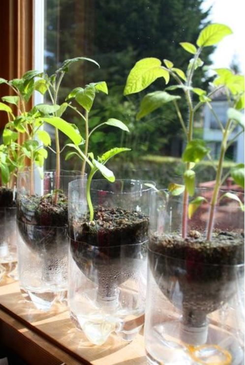 17 Useful Reuse Plastic Bottles Ideas Self Watering Planter