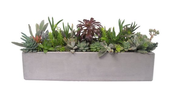 Succulent Mix in an 18 Grey Rectangular Handmade by Window27