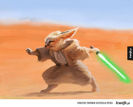 Fenek Jedi My Universe Pinterest