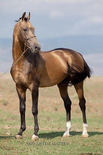 Horses IMG_7051 - http://www.1pic4u.com/blog/2014/10/04/horses-img_7051/