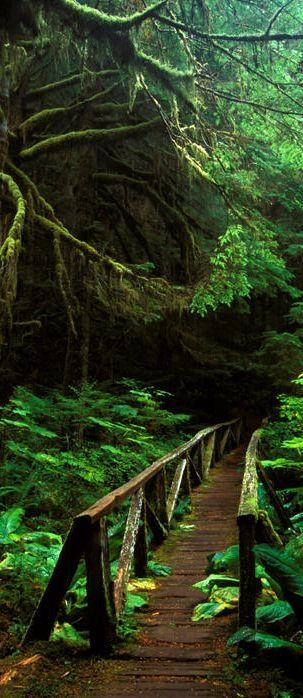 Footbridge in the forest of Mt. Rainier National Park in Washington • Stephen Penland Landscape Photography by MyohoDane