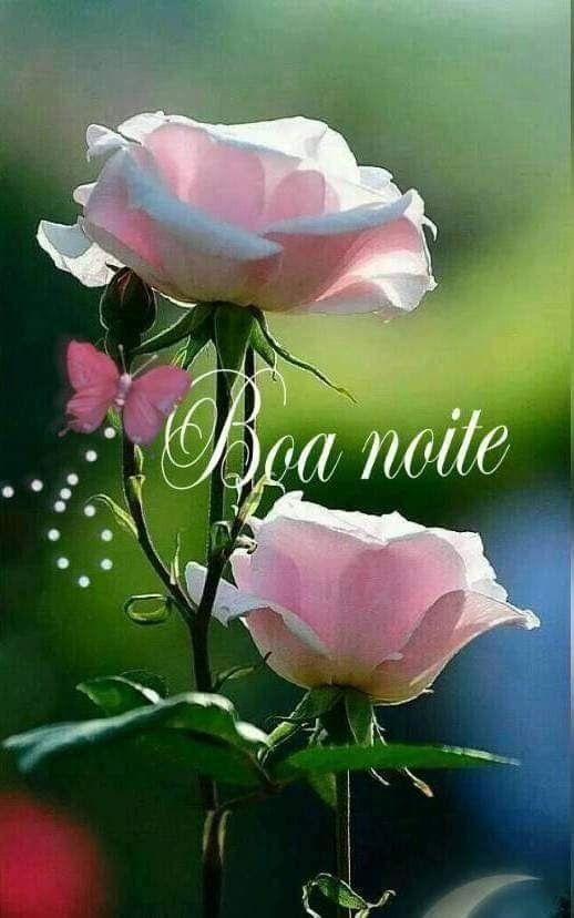 Pin De Penha Em Boa Noite Flores Exóticas Rosas Lindas E