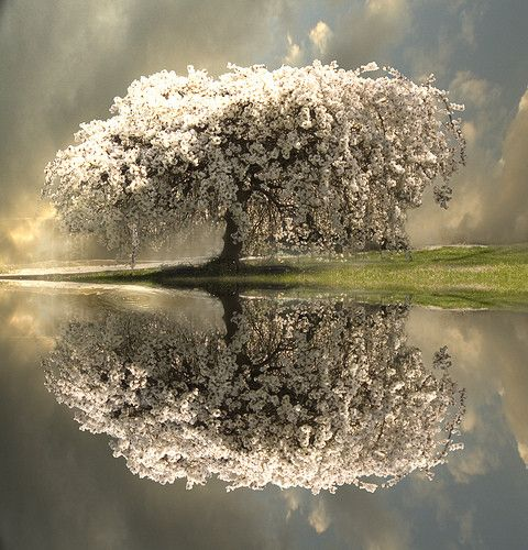 reflection, tree, water