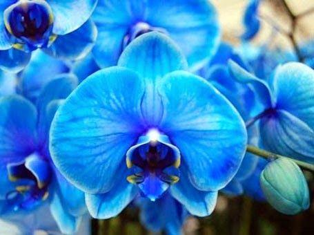 TideMonteiro Blogger: Orquídeas e suas frases!
