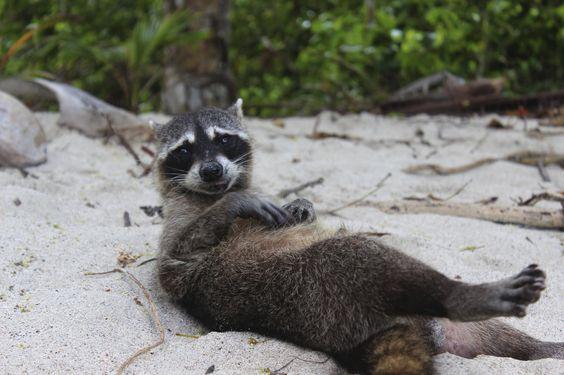 Manuel Antonio er beliggende ved Stillehavskysten og er især kendt for sin nationalpark af samme navn, som er Costa Ricas mindste, men mest besøgte og kendte af landets 25 nationalparker. Den er udråbt til at være blandt de 12 smukkeste nationalparker i verden bestående af hvide sandstrande, koralrev, vandfald og frodig grøn regnskov beliggende helt ned til strandene, som er landets smukkeste og bedste sandstrande.