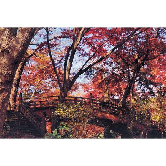 By ikky_68: 12月の秋 #紅葉 #熱海市 #熱海梅園 #赤 #自然 #橋 #期待以上のポテンシャル #常々圧倒される #architecture #view #landscape #bridge #nature #woods #rural #red #sky #fall #leaves #team_jp_ #team_jp_秋色2015 #tokyocameraclub #東京カメラ部 #写真好きな人と繋がりたい #α5000 #landscape #contratahotel
