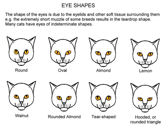 how to find my eye shape
