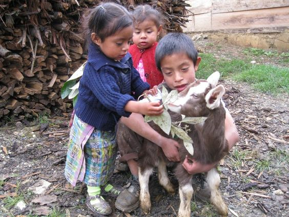 adorable, right? $40 buys 1 goat for a family in guatemala - and improves children's nutrition.