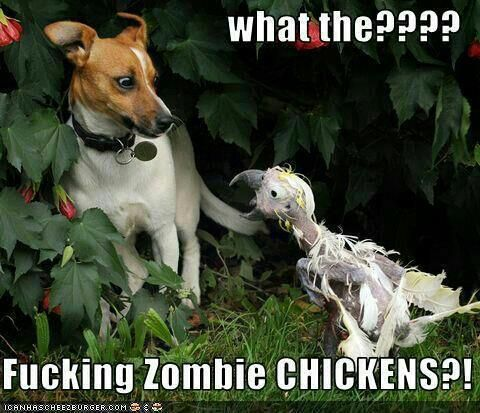 zombie chickens!