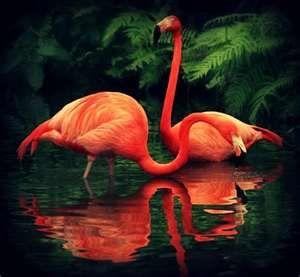 flamingo flamingo flame httpsupremebeing typepad flamingo