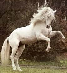 Image result for real horses