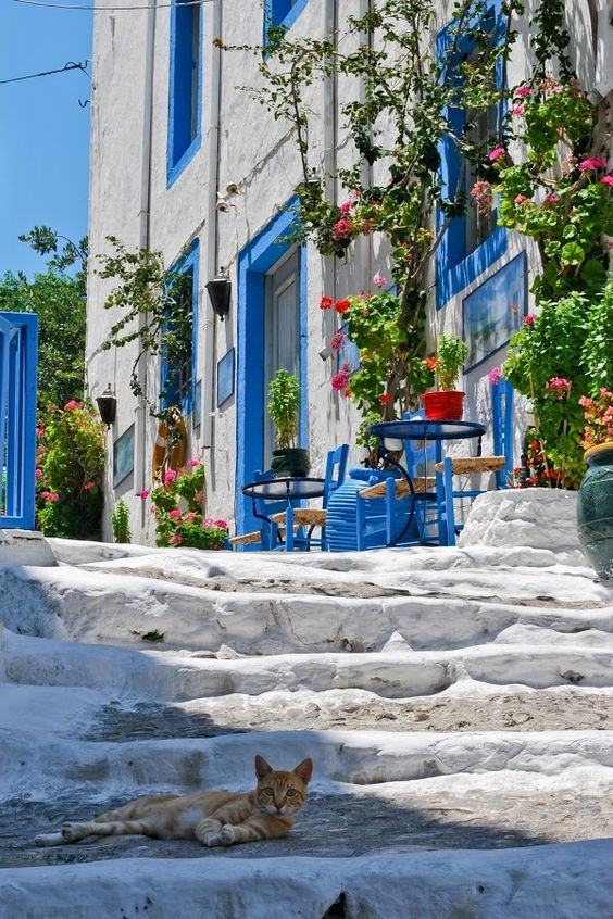 Street in Kos Island, Greece- with a beautiful cat!:
