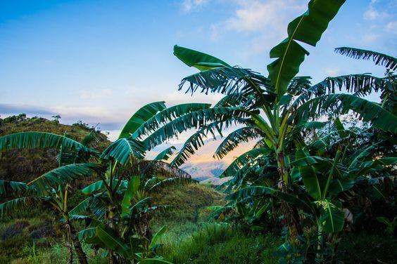 Bananenbäume in den Bergen
