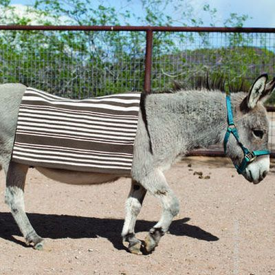 Dash & Albert's Rugby Stripe rug is a best-seller. Available in several color combination, this striped indoor/outdoor rug is as versatile as it is durable and easy-care.