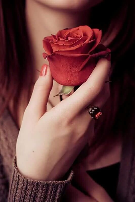 Stylish Whatsapp Dp For Girls Red Roses Flowers Love Rose