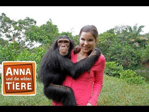 Schlau Wie Die Schimpansen Doku Reportage Fur Kinder Anna