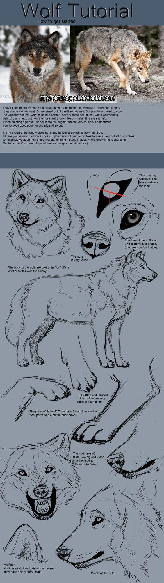 Wolf Tutorial by TheMysticWolf on Deviantart Much need. Much want.