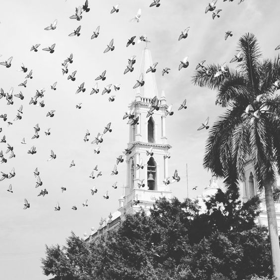 Birds in flight. Mazatlan Mexico.