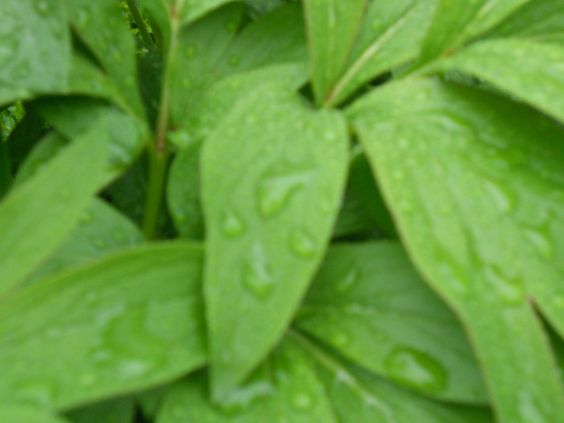 Regnfuld natur