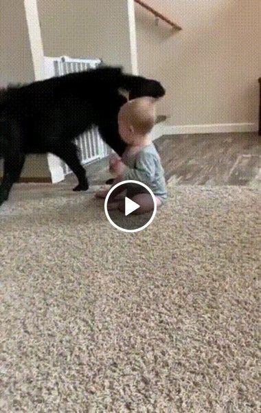 Cão brincando com bebê
