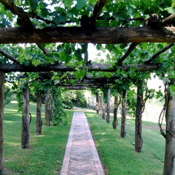 Pergola Designs For Grapes: Grape Arbor, Arbors And Pergolas On Pinterest