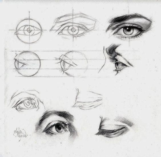 Beginners groep 21 november 2013 Van voren lijkt een gezicht op een ovaal. Het gezicht kunnen wij op te delen in drie ongeveer gelijke delen : Bovenste deel met het voorhoofd. Middendeel met met og...