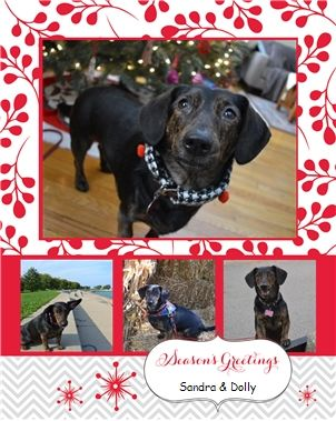 Merry Christmas & Seasons Greetings from Dolly the Doxie!