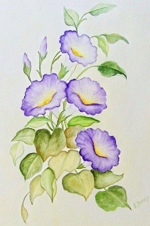 Violet Volubilis Peinture Aquarelle Realiste De Quelques