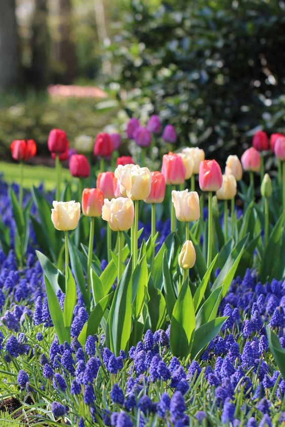 Fall is the time to plant spring-blooming bulbs such as tulips, daffodils, crocus and alliums. Before ordering your bulbs, here are a few tips to guarantee great results next spring. Pick a Color Theme Interior designers often work with a color palette – a selection of colors chosen to give a room or a home