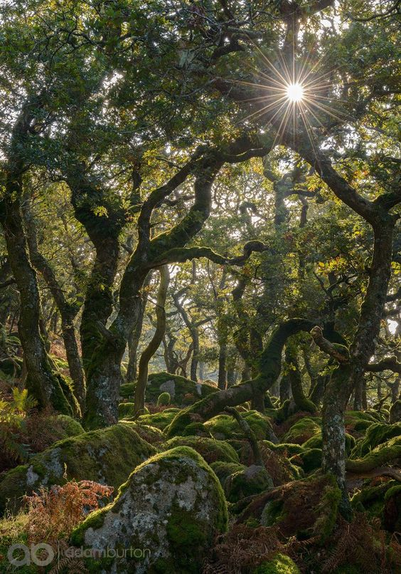 Ancient Woodlands by Adam Burton on 500px