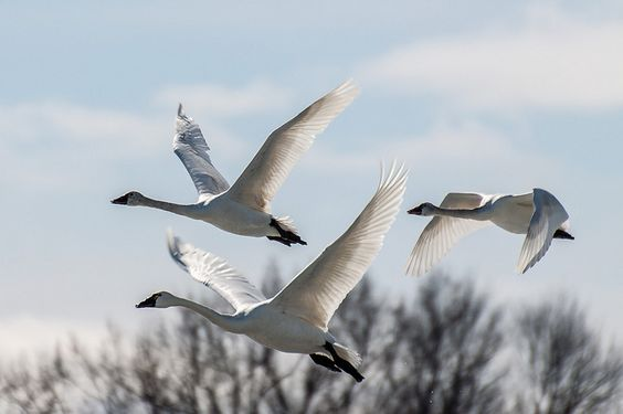 Climate Change Will Endanger Hundreds of America's Bird Species