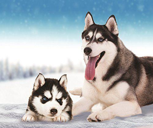 Husky Dog Fleece Throw Blanket Homedecor Siberianhusky