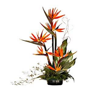 bird+of+paradise+flower+arrangement | Send Exotic Beauties Flower Baskets Flowers to 500+ cities in India