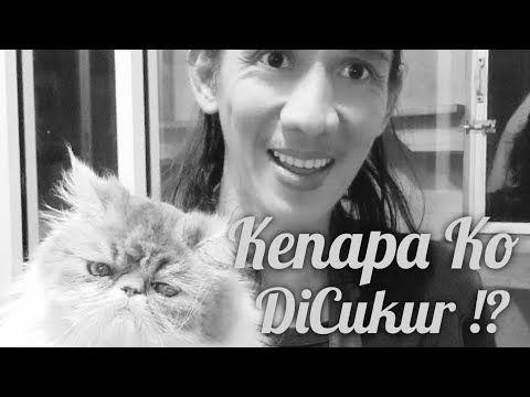Grooming Kucing Ceritanya Versi Jaman Dulu Mencukurbulutelapakkaki Youtube Di 2021 Kucing Youtube Cerita