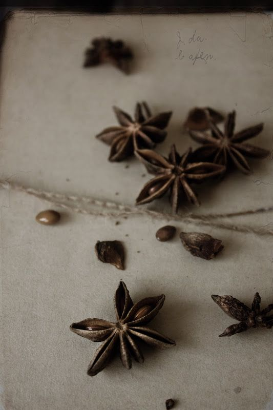 Star anise | Food, photography and stories, by Pratos e Travessas