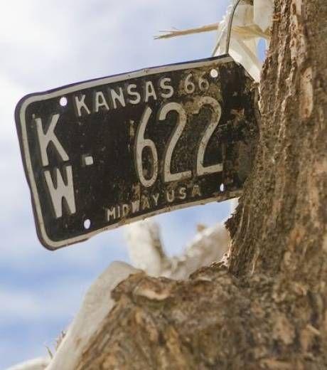 Une plaque d'immatriculation est restée plantée dans un tronc d'arbre par la force du vent