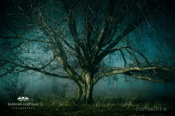 Winter Tree, taken in the fog Early one January morning. Just on the edge of Tilshead, a little village in Salisbury, Wiltshire, UK by Barbara Leatham Photography - copyright 2014