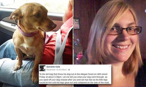 Woman slams pet owner who abandoned scared dog on the side of the road…