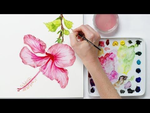 How To Paint A Realistic Hibiscus Flower In Watercolour Flower