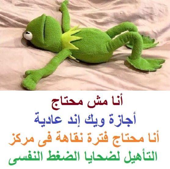 Pin By Nagy Doos On منوعات وعجائب Arabic Funny Dinosaur Stuffed Animal Funny Pictures