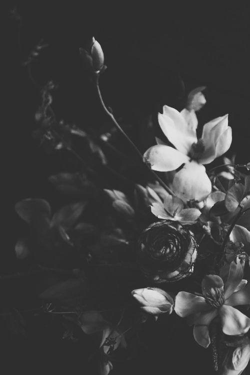 bouquet of black and white flowers still life