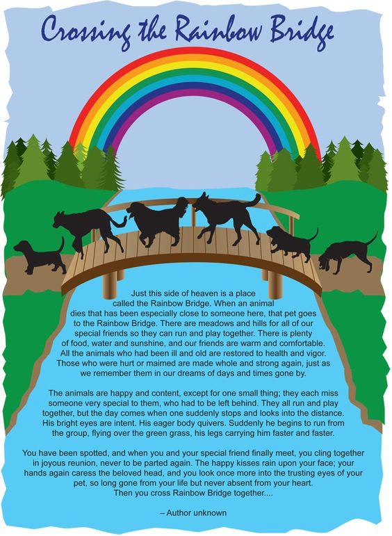 Rainbow Bridge Dog Crossing Rainbow Bridge Dog Flyer Jpg Love This Pinterest The O
